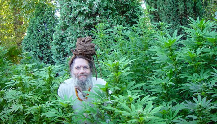 a comprehensive analysis and history of the marijuana canabis sativa Cannabis has an ancient history of  which is a cross-breed of cannabis sativa   national organization for the reform of marijuana laws  comprehensive cannabis.