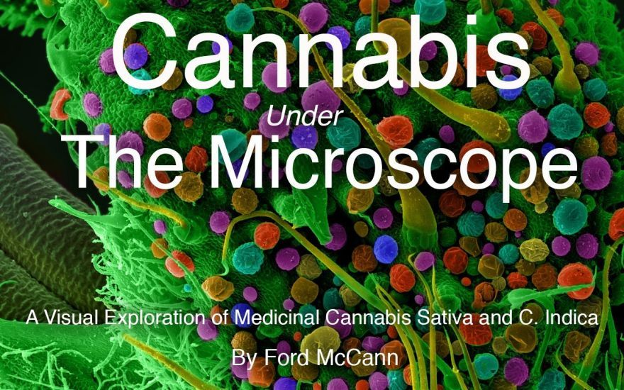 marijuana-under-the-microscope-0