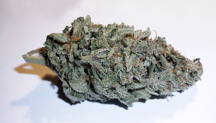 nug Picture of blue dream