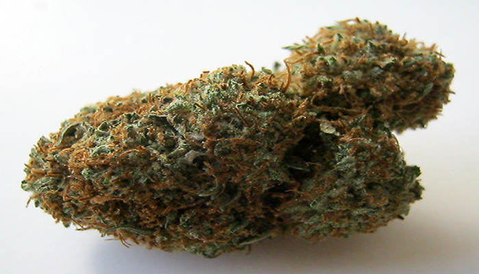nug Picture of bubba kush