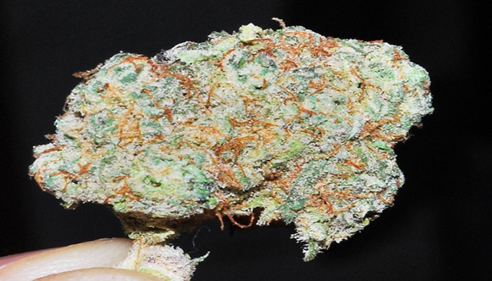 nug Picture of king kong weed