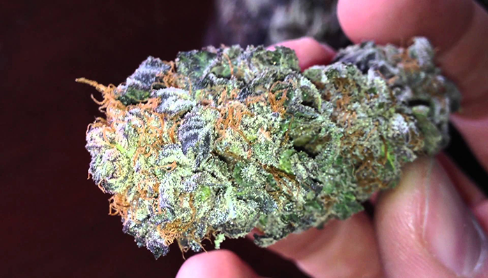 epic face weed 20 best marijuana strains by benefits