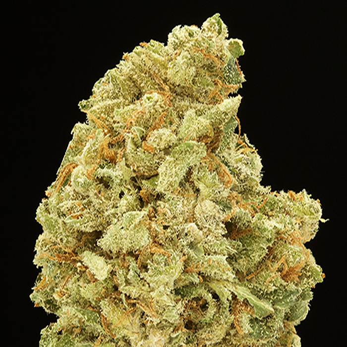 nug Picture of Ambrosia
