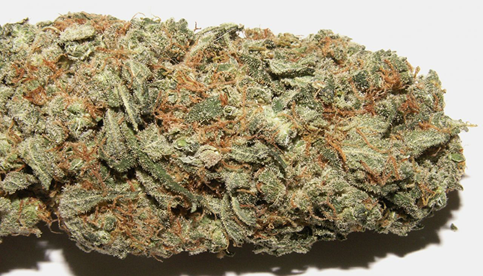 nug Picture of sour diesel