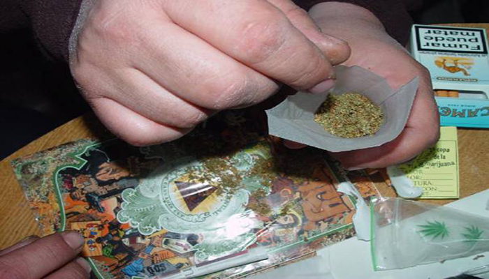 tulip_joint_3_canna_chronicle