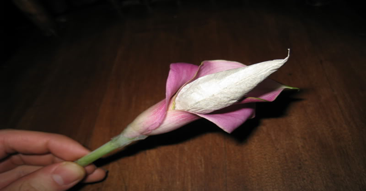 Has joint