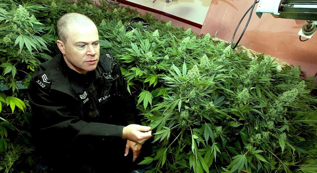 Cannabis-Police