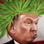 Could Big Alcohol Influence Trump's stance on Legal Weed?
