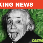 A New Harvard Study Indicates That Cannabis Can Make You Smarter